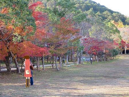 紅葉狩りな散歩5
