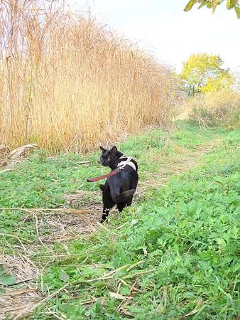 チュウヒのいる湿原1