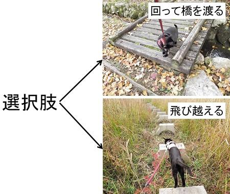 紅葉の終わり_黒猫チャンプ16