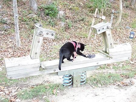 紅葉の終わり_黒猫チャンプ21