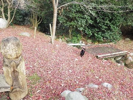 紅葉の終わり_黒猫チャンプ23