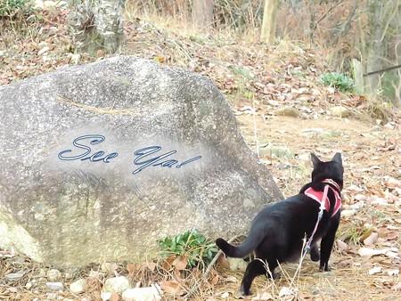 紅葉の終わり_黒猫チャンプ37