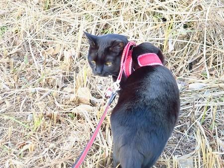 黒猫チャンプ家を建てる音に驚く8