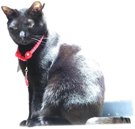 黒猫チャンプのカラー2