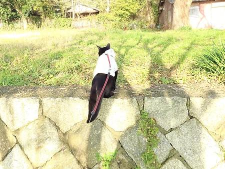 黒猫チャンプの旅は道連れ43