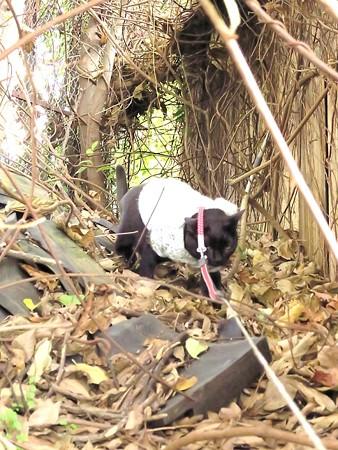 黒猫チャンプの旅は道連れ48