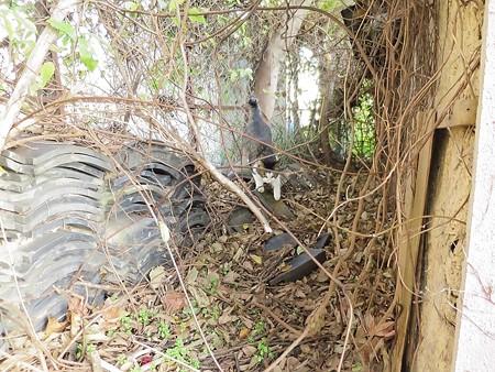黒猫チャンプの旅は道連れ49