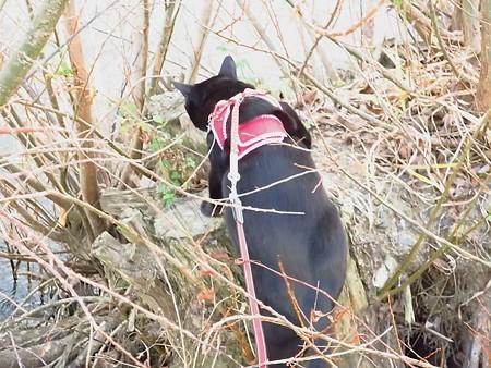 寒い水辺の散歩11