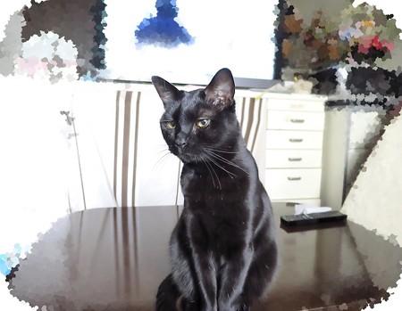 黒猫チャンプ3