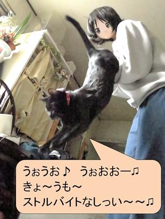 黒猫チャンプ猫の師走4