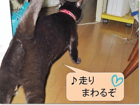 黒猫チャンプ猫の師走6