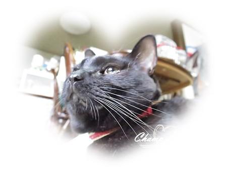 黒猫チャンプ猫の師走7