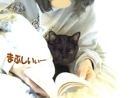 黒猫チャンプの読書2