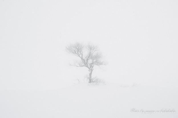 写真: 遠い雪景色。#1