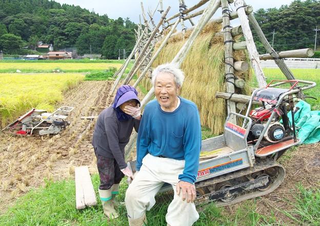 写真: 稲刈り(3)H29,9,16