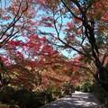 写真: 京の紅葉、龍安寺(1)H29,11,17