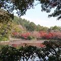 京の紅葉、龍安寺(7)H29,11,17