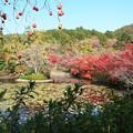 京の紅葉、龍安寺 H29,11,17