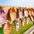 写真: 願いの貝殻