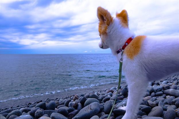 大海に望んで