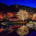 写真: crimson foliage