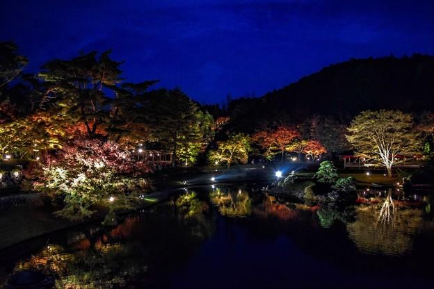 Night of the pond