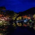 写真: Night of the pond