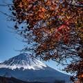 秋の終わりの富士