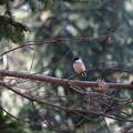 写真: 公園の野鳥