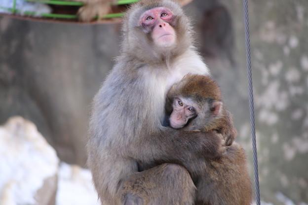 絆 旭山動物園