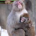 写真: 絆 旭山動物園