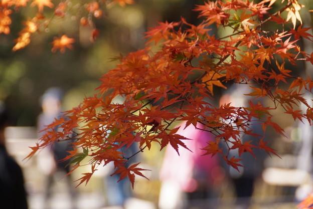 写真: 紅葉風景!20141115