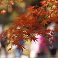 Photos: 紅葉風景!20141115