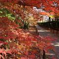 写真: 紅葉が彩る参道、光明寺2014