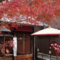 Photos: 紅葉彩るお店!2014