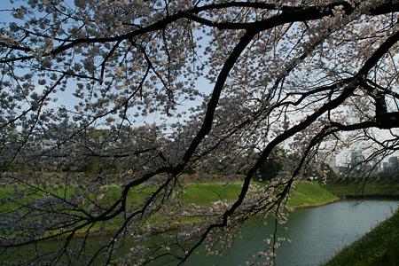 千鳥ヶ淵の桜!(100403)