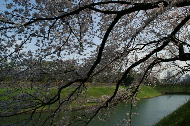 Photos: 千鳥ヶ淵の桜!(100403)