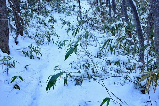 冬のけもの道を歩く