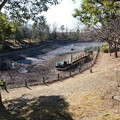 Photos: 池の水を抜く