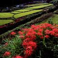 明日香:稲渕の秋