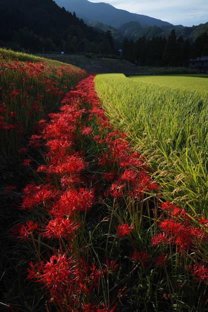 葛城山麓:一言主神社付近の秋風景