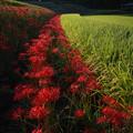 写真: 葛城山麓:一言主神社付近の秋風景
