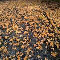 金木犀のカーペット
