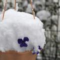 写真: 庭のかき氷?