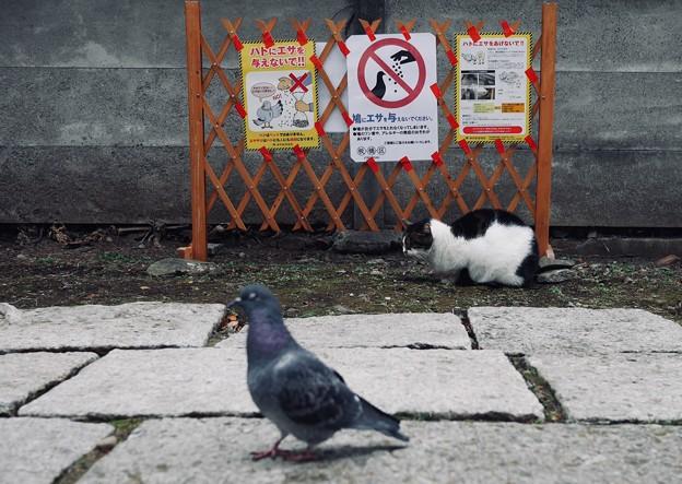 餌やり禁止