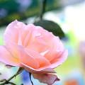 薔薇と自販機