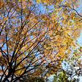 写真: 采女橋公園
