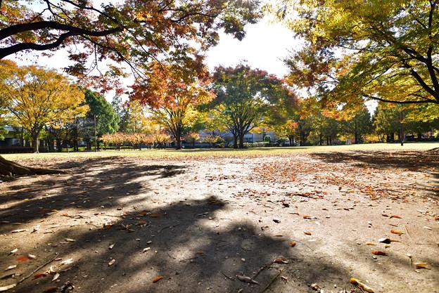 亀戸中央公園.