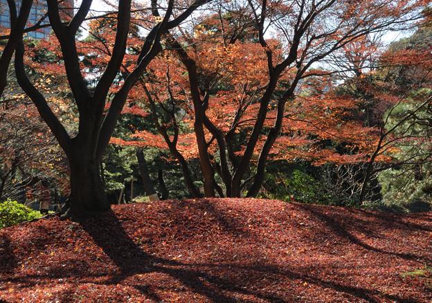 小石川後楽園30
