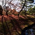 小石川後楽園32